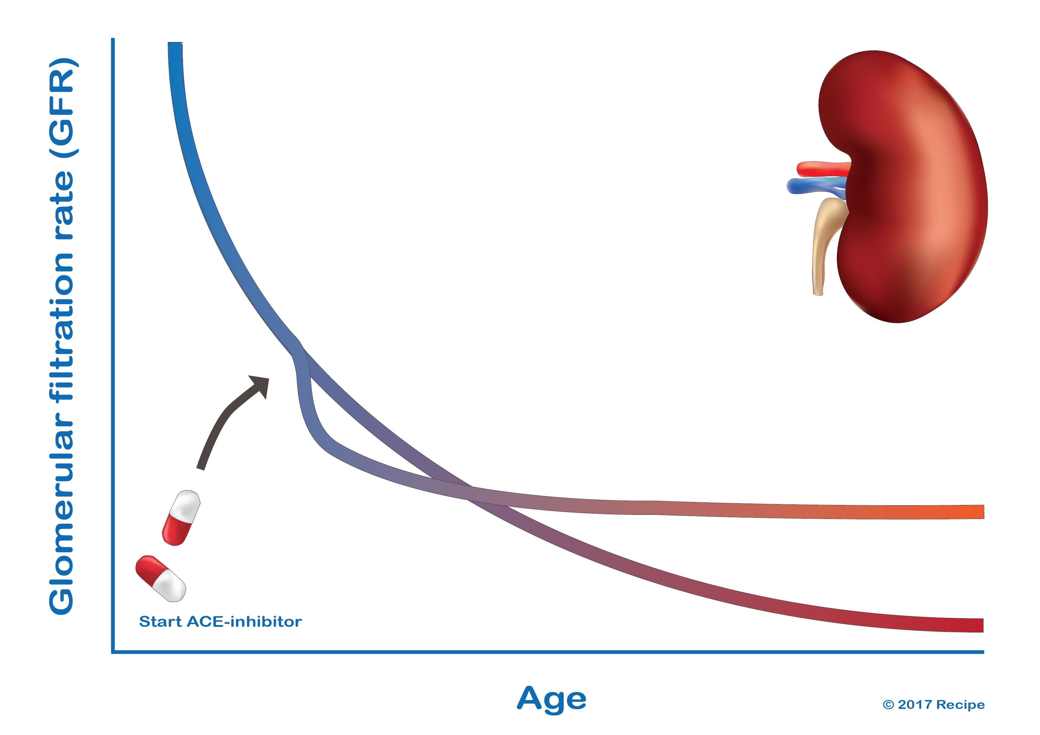 The influence of ACE-inhibitors on the glomerular filtration rate in diabetes patients